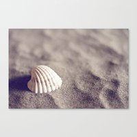 seashell Canvas Prints featuring Seashell by Dena Brender Photography