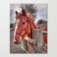 pony Canvas Prints featuring Pony  by Darren Wilkes Fine Art Images