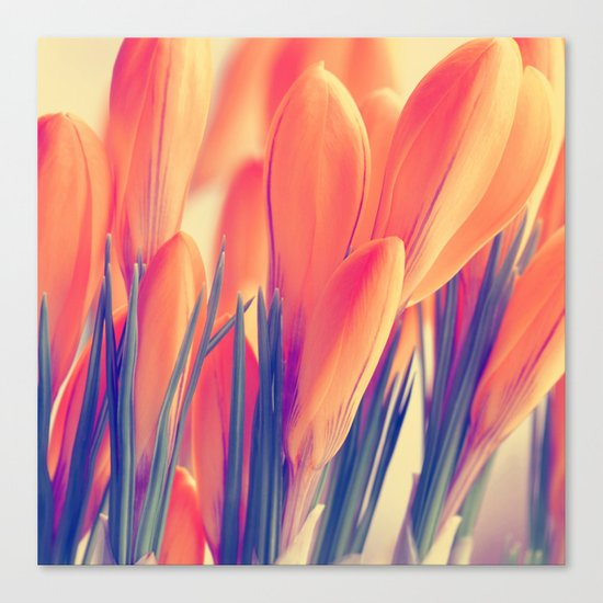 Spring 151 Canvas Print