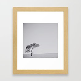 This little tree Framed Art Print