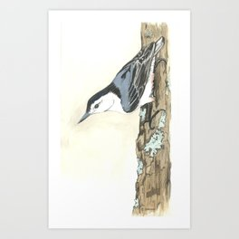 White-Breasted Nuthatch - Watercolor Art Print