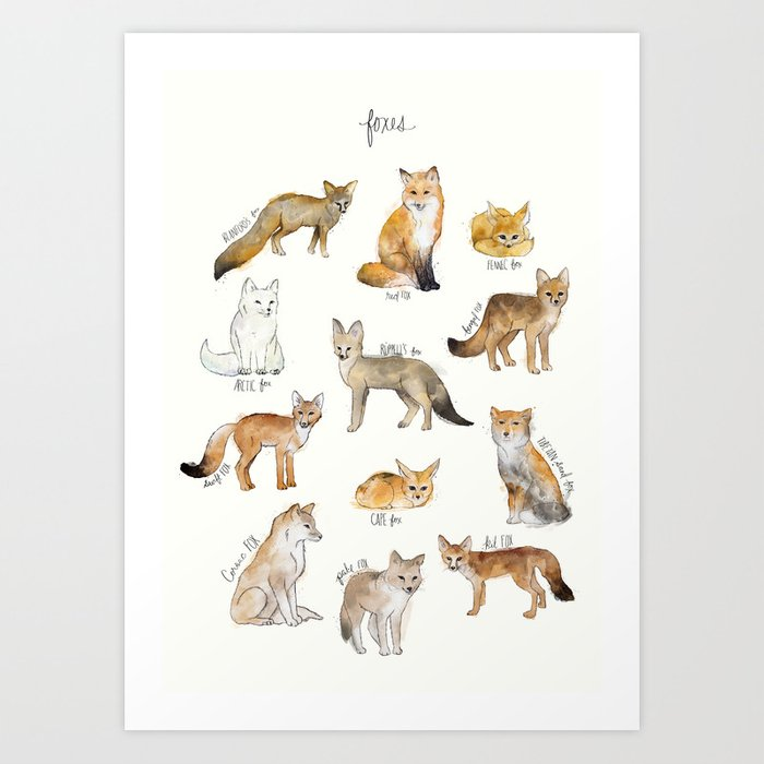 Discover the motif FOXES by Amy Hamilton as a print at TOPPOSTER