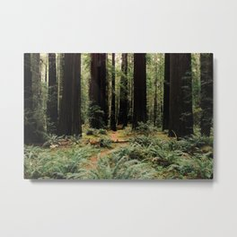 Deer in Redwood Forest Metal Print