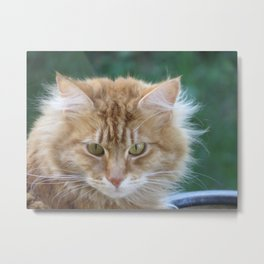 Red Cat Metal Print