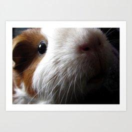 Rambo - guinea pigs Art Print