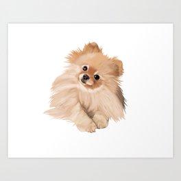 Pomeranian Art Print