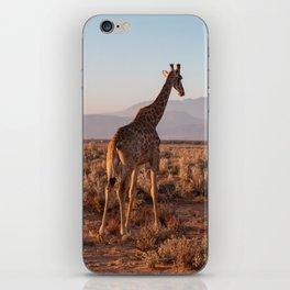 Giraffe admiring the savannah in South Africa iPhone Skin