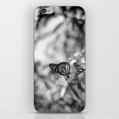 Papillion en  Noir iPhone & iPod Skin