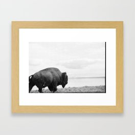 Bison at Yellowstone National Park Framed Art Print