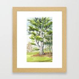 White Pine Framed Art Print