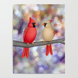 cardinals on a branch - bokeh Poster