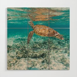 Turtle ii Wood Wall Art