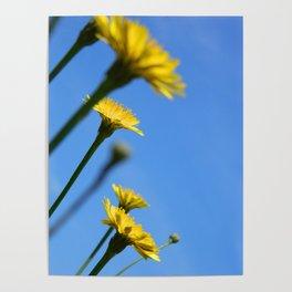 Dandelion Flowers Poster