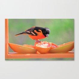 Orange Juice for Breakfast (Baltimore Oriole) Canvas Print