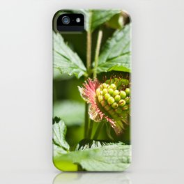 Young Salmonberry Photography Print iPhone Case
