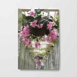 Medinilla Magnifica - botanical photography Metal Print