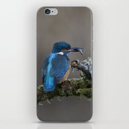 Kingfisher with Fish on a branch iPhone Skin