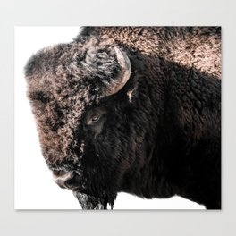 A Bison in Wyoming Canvas Print