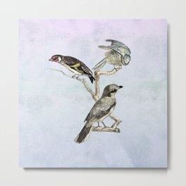A trio of birds Metal Print