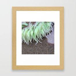 Green Anemone Framed Art Print