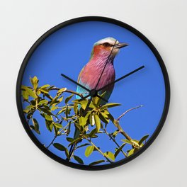 Lilac-breasted roller - Africa wildlife Wall Clock