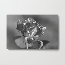 """""""Under the Rose"""" by ICA PAVON Metal Print"""