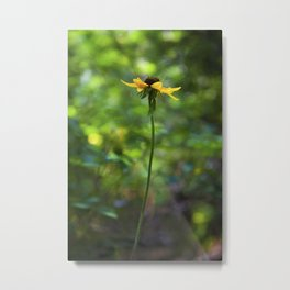 Cheery Susans Metal Print