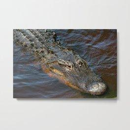 April Alligator Metal Print