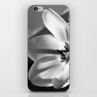 tulip iPhone & iPod Skins featuring tulip by littlesilversparks