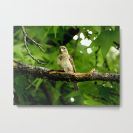 Finch: I've Been Spotted Metal Print