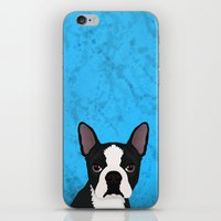 terrier iPhone & iPod Skins featuring Boston terrier by Nir P