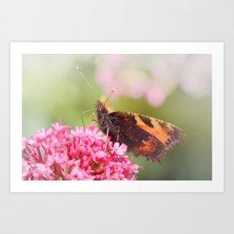 Butterfly on valerian flower Art Print