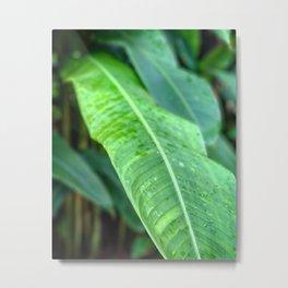 Leaf (Color and Focus) Metal Print