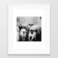 morrocan Framed Art Prints featuring Sheep in Morrocan desert (black & white) by Hanke Arkenbout
