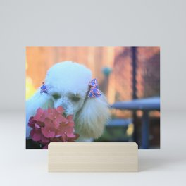 Toy Poodle in the garden Mini Art Print