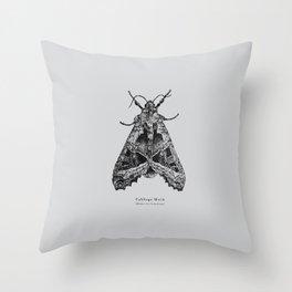 Cabbage Moth [Mamestra brassicae] Throw Pillow