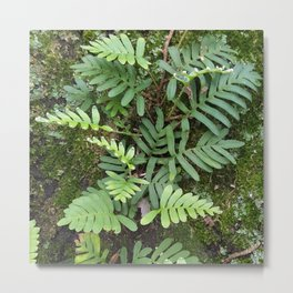 Moss and Fern Metal Print