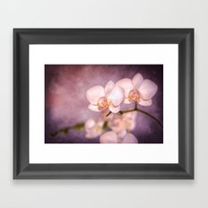the white orchid - violet texture Framed Art Print