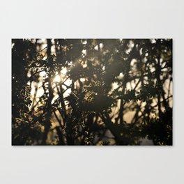 Silhouette Canvas Print