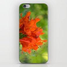 Exotic Ginger Flower Bignone 9125 iPhone & iPod Skin