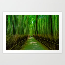 Bamboo Trail Art Print
