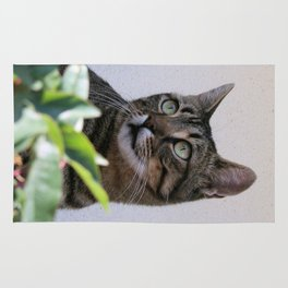 Tabby Cat Sitting In The Shade Behind Passiflora Vine Rug