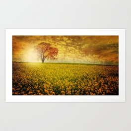 Lonely Tree In The Middle Of A Yellow Rape Field Ultra HD Art Print