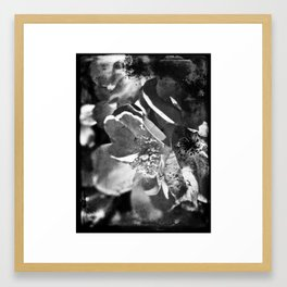Knockout Roses No.1 Framed Art Print