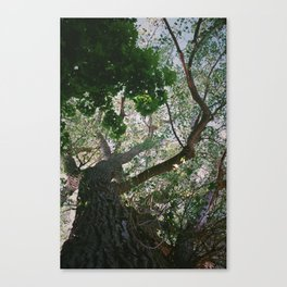 Consistant growth Canvas Print