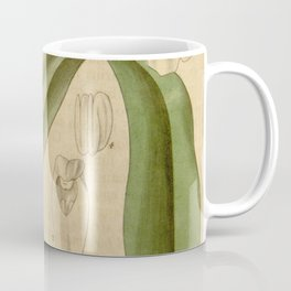 Encyclia cordigera (as Epidendrum macrochilum) Curtis' 63 (N.S. 10) pl. 3534 (1836) Coffee Mug