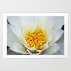 Lotus Heart Art Print