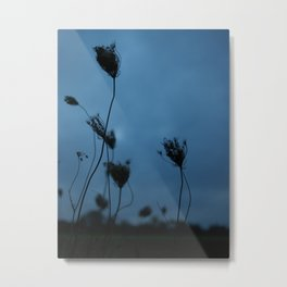 Queen Anne's Lace at Dusk Metal Print