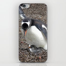 Gentoo Penguin with Chick iPhone Skin
