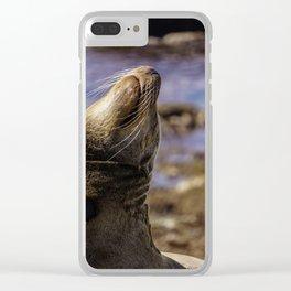 La Jolla Seals Clear iPhone Case